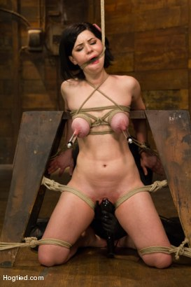 Photo number 11 from Pale Big Breasted Brunette Beauty Gets Anal Cherry Taken shot for Hogtied on Kink.com. Featuring Belle Noire in hardcore BDSM & Fetish porn.