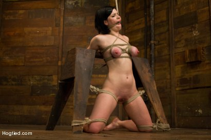 Photo number 13 from Pale Big Breasted Brunette Beauty Gets Anal Cherry Taken shot for Hogtied on Kink.com. Featuring Belle Noire in hardcore BDSM & Fetish porn.