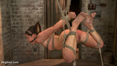 Photo number 14 from Bringing Home The Gold shot for Hogtied on Kink.com. Featuring Mia Gold in hardcore BDSM & Fetish porn.