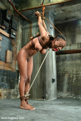 Photo number 12 from Yellow Kitty shot for Hogtied on Kink.com. Featuring Yellow Kitty in hardcore BDSM & Fetish porn.