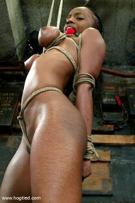 Photo number 5 from Yellow Kitty shot for Hogtied on Kink.com. Featuring Yellow Kitty in hardcore BDSM & Fetish porn.