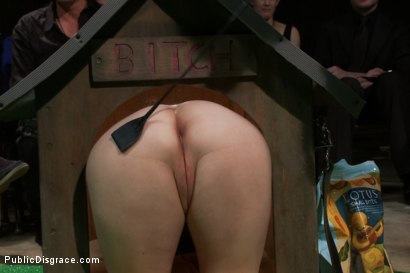 Photo number 3 from Puppy love! Chubby pet turned obedient bitch. shot for Public Disgrace on Kink.com. Featuring Alexxa Bound and Astral Dust in hardcore BDSM & Fetish porn.