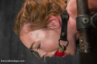 Photo number 3 from Jodi Taylor LIVE shot for Device Bondage on Kink.com. Featuring Jodi Taylor, Mz Berlin and Ivy Addams in hardcore BDSM & Fetish porn.