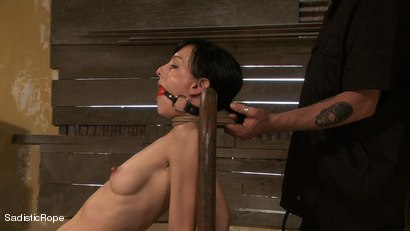 Photo number 7 from WARNING! Extreme Torment and Mind Bending Orgasms shot for Sadistic Rope on Kink.com. Featuring Elise Graves in hardcore BDSM & Fetish porn.