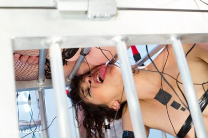Photo number 2 from Audrey Hollander and Mz Berlin Get Worshipped, Electrosluts Style! shot for Electro Sluts on Kink.com. Featuring Mz Berlin, Bianca Stone and Audrey Hollander in hardcore BDSM & Fetish porn.