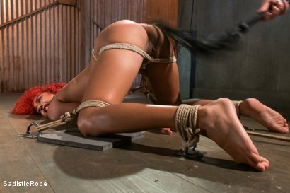 Photo number 3 from Newbie First Time in Brutal Rope Bondage!! shot for Sadistic Rope on Kink.com. Featuring Daisy Ducati in hardcore BDSM & Fetish porn.