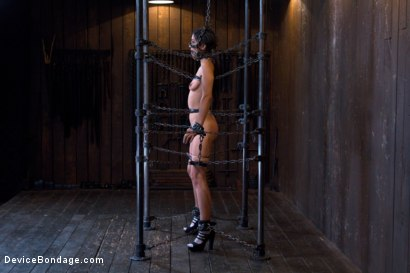 Bdsm immobilized