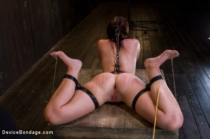 Photo number 6 from Wet Mess shot for Device Bondage on Kink.com. Featuring Jodi Taylor in hardcore BDSM & Fetish porn.