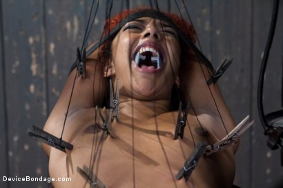 Photo number 7 from Slut on Display shot for Device Bondage on Kink.com. Featuring Daisy Ducati in hardcore BDSM & Fetish porn.