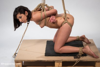 Photo number 13 from Mz. Berlin Clamps, Whips, and Double Stuffs Newbie Vivi Marie shot for Whipped Ass on Kink.com. Featuring Mz Berlin and Vivi Marie in hardcore BDSM & Fetish porn.