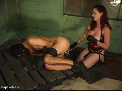 Photo number 12 from Dick On A Sawhorse shot for Captive Male on Kink.com. Featuring Mz Berlin and Lefty in hardcore BDSM & Fetish porn.