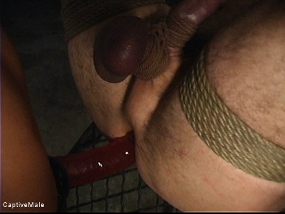 Photo number 13 from She Strikes Lust And Fear shot for Captive Male on Kink.com. Featuring Brooke Banner and Wild Bill in hardcore BDSM & Fetish porn.
