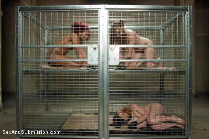 Photo number 2 from The Kennels shot for Sex And Submission on Kink.com. Featuring James Deen, Juliette March, Daisy Ducati and Bella Rossi in hardcore BDSM & Fetish porn.
