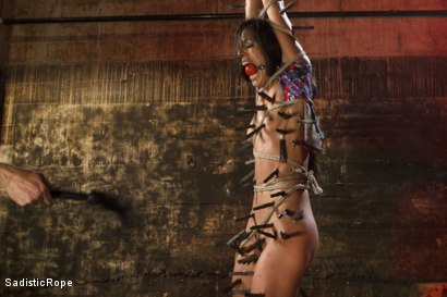 Photo number 3 from Extreme Suffering - Lyla Storm shot for Sadistic Rope on Kink.com. Featuring Lyla Storm in hardcore BDSM & Fetish porn.