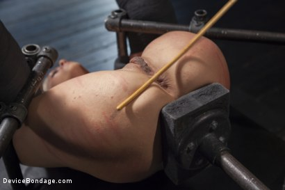 Photo number 15 from Blonde MILF Gets Devastated with Sensory Overload!! shot for Device Bondage on Kink.com. Featuring Holly Heart and Orlando in hardcore BDSM & Fetish porn.