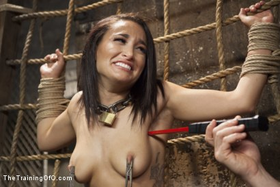 Photo number 2 from Training Gabbi shot for The Training Of O on Kink.com. Featuring Owen Gray and Gabriella Paltrova in hardcore BDSM & Fetish porn.