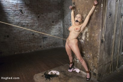Photo number 5 from Curvy Big Tits Blonde Bombshell Bound and Molested shot for Hogtied on Kink.com. Featuring Christie Stevens in hardcore BDSM & Fetish porn.
