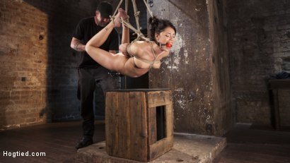 Photo number 2 from Penthouse Pet, Ava Dalush, Gets Devastated in Brutal Bondage!! shot for Hogtied on Kink.com. Featuring Ava Dalush in hardcore BDSM & Fetish porn.