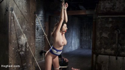 Photo number 8 from Helpless Squirting Slut shot for Hogtied on Kink.com. Featuring Danica Dillon in hardcore BDSM & Fetish porn.
