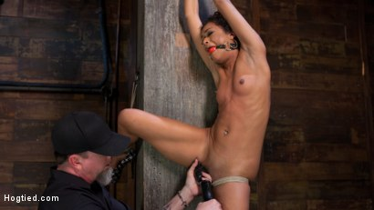 Photo number 14 from Skin Diamond is Tormented in Brutal Bondage and Made to Cum shot for Hogtied on Kink.com. Featuring Skin Diamond and The Pope in hardcore BDSM & Fetish porn.