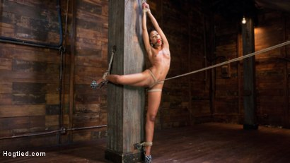 Photo number 2 from Skin Diamond is Tormented in Brutal Bondage and Made to Cum shot for Hogtied on Kink.com. Featuring Skin Diamond and The Pope in hardcore BDSM & Fetish porn.