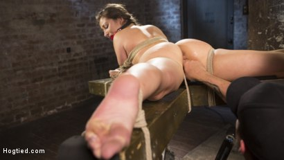 Photo number 10 from Dani Daniels Submits in Brutal Bondage shot for Hogtied on Kink.com. Featuring Dani Daniels and The Pope in hardcore BDSM & Fetish porn.