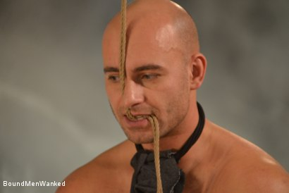Photo number 19 from Enjoy Linet's Natural Dominance shot for Bound Men Wanked on Kink.com. Featuring Linet Slag and Need in hardcore BDSM & Fetish porn.
