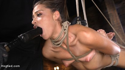 Photo number 8 from Petite Slut Avi Love is Bound, Tormented, and Made to Cum shot for Hogtied on Kink.com. Featuring Avi Love in hardcore BDSM & Fetish porn.