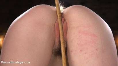 Photo number 8 from Lily LaBeau is Brutally Tormented in Grueling Bondage shot for Device Bondage on Kink.com. Featuring Lily LaBeau in hardcore BDSM & Fetish porn.