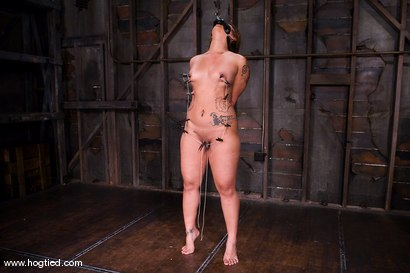 Photo number 7 from DragonLily is back and is doing a realtime Hogtied shoot.<br>No breaks, no rest, no cuts. shot for Hogtied on Kink.com. Featuring DragonLily in hardcore BDSM & Fetish porn.
