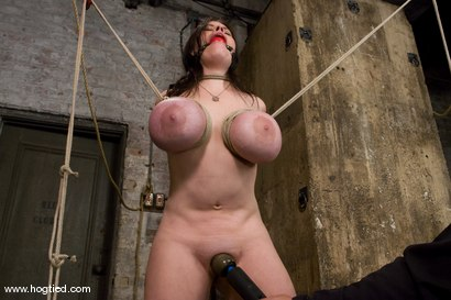 Photo number 8 from Welcom back Daphne Rosen and<br>her huge 34G breasts. Tits worth tying up! shot for Hogtied on Kink.com. Featuring Daphne Rosen in hardcore BDSM & Fetish porn.