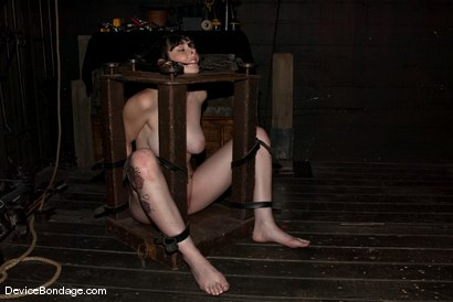 Photo number 6 from Part Two of the<br> December live feed. shot for Device Bondage on Kink.com. Featuring Ami Emerson, Natalie Minx, Damon Pierce and Amber Keen in hardcore BDSM & Fetish porn.