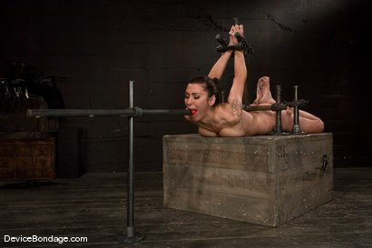 Photo number 11 from Princess Donna<br>Trapped in a hard metal hogtie<br>finger fucked to orgasm shot for Device Bondage on Kink.com. Featuring Princess Donna Dolore in hardcore BDSM & Fetish porn.