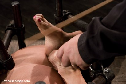 Photo number 13 from Princess Donna<br>Trapped in a hard metal hogtie<br>finger fucked to orgasm shot for Device Bondage on Kink.com. Featuring Princess Donna Dolore in hardcore BDSM & Fetish porn.
