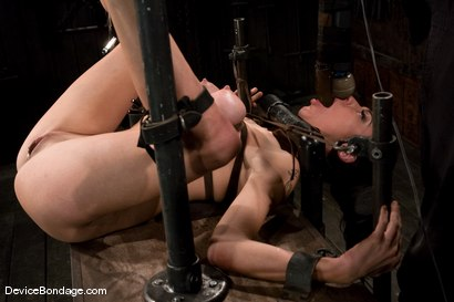 Photo number 11 from Princess Donna<br>World famous mistress bound<br>and begging to cum. shot for Device Bondage on Kink.com. Featuring Princess Donna Dolore in hardcore BDSM & Fetish porn.