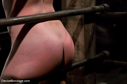 Photo number 11 from Krissy Lynn<br> Big titted, blond, trapped in the big squeeze. shot for Device Bondage on Kink.com. Featuring Krissy Lynn in hardcore BDSM & Fetish porn.