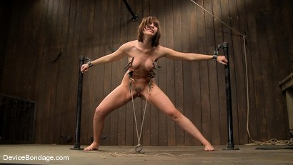 Photo number 6 from Dana DeArmond, Nika Noire and Ariel X<br> Part 4 of 4 of the May Live Feed shot for Device Bondage on Kink.com. Featuring Nika Noire, Ariel X and Dana DeArmond in hardcore BDSM & Fetish porn.