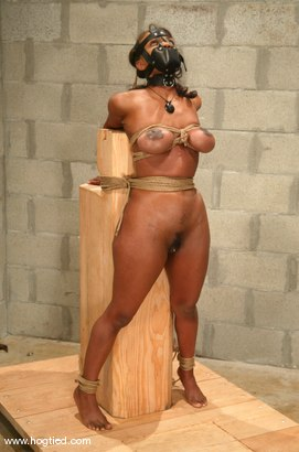 Photo number 13 from Sinnamon Love shot for Hogtied on Kink.com. Featuring Sinnamon Love in hardcore BDSM & Fetish porn.