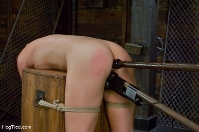 Photo number 10 from Kaydence is spread wide & fucked in the ass shot for Hogtied on Kink.com. Featuring Kaydence Katchings in hardcore BDSM & Fetish porn.