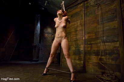 Photo number 3 from Kaydence is spread wide & fucked in the ass shot for Hogtied on Kink.com. Featuring Kaydence Katchings in hardcore BDSM & Fetish porn.