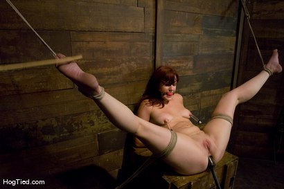 Photo number 12 from Kaydence is spread wide & fucked in the ass shot for Hogtied on Kink.com. Featuring Kaydence Katchings in hardcore BDSM & Fetish porn.