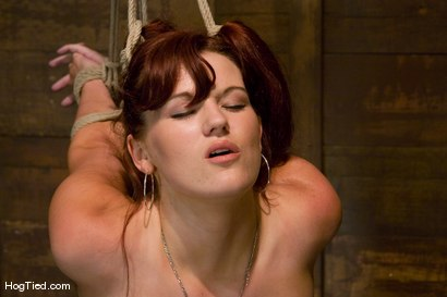 Photo number 5 from Kaydence is spread wide & fucked in the ass shot for Hogtied on Kink.com. Featuring Kaydence Katchings in hardcore BDSM & Fetish porn.