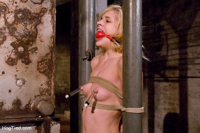 Photo number 6 from Ally Ann: Whining bitch takes what is given to her shot for Hogtied on Kink.com. Featuring Ally Ann in hardcore BDSM & Fetish porn.
