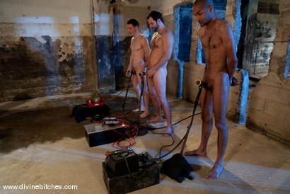 Photo number 13 from Three Slaveboys Milked shot for Divine Bitches on Kink.com. Featuring Mickey Mod, Maitresse Madeline Marlowe , David Chase, Madison Young and Martin Lorenzo in hardcore BDSM & Fetish porn.