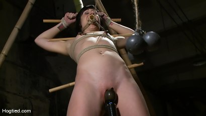 Photo number 7 from Dylan's Bamboo Bondage Dilemma shot for Hogtied on Kink.com. Featuring Dylan Ryan in hardcore BDSM & Fetish porn.