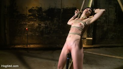 Photo number 9 from Dylan's Bamboo Bondage Dilemma shot for Hogtied on Kink.com. Featuring Dylan Ryan in hardcore BDSM & Fetish porn.