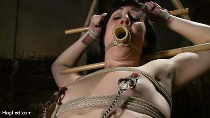 Photo number 6 from Dylan's Bamboo Bondage Dilemma shot for Hogtied on Kink.com. Featuring Dylan Ryan in hardcore BDSM & Fetish porn.