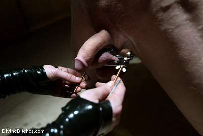 Photo number 3 from FEMDOM 2.0 shot for Divine Bitches on Kink.com. Featuring Maitresse Madeline Marlowe  and Kade in hardcore BDSM & Fetish porn.