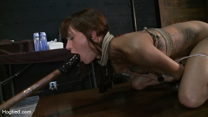 Photo number 9 from Amateur Casting Couch: Gia DiMarco shot for Hogtied on Kink.com. Featuring Gia DiMarco in hardcore BDSM & Fetish porn.