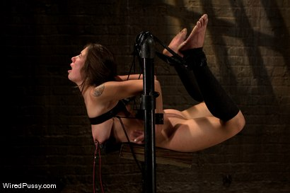 Photo number 11 from Good Puppy shot for Wired Pussy on Kink.com. Featuring Vai and Bobbi Starr in hardcore BDSM & Fetish porn.